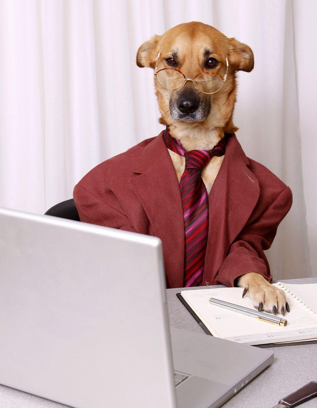 очень бизнессная собака