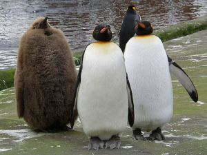 Not-Like-The-Others-Penguin